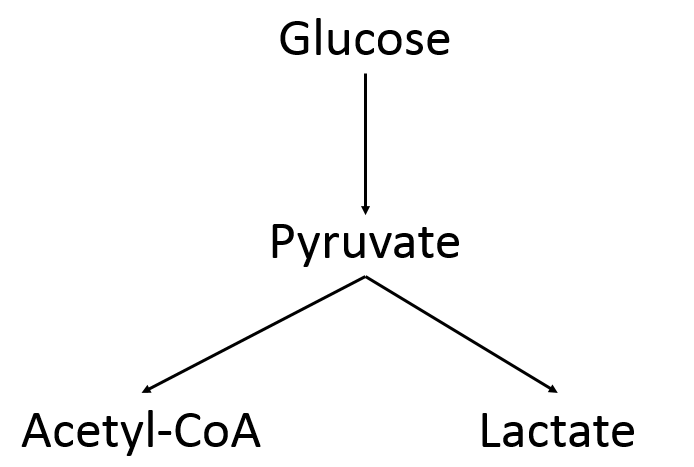 The Fate of Pyruvate